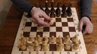 победить в шахматах в 2 хода